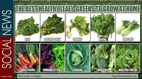 different type of leafy vegetable with name the best healthy leafy greens to grow at home