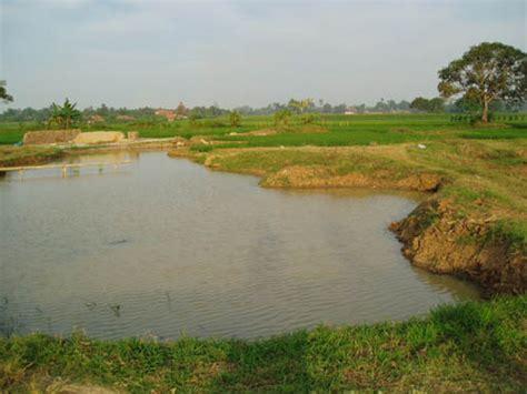 Jual Bibit Lele Sangkuriang Palembang budidaya dan pembibitan ikan patin pasopati