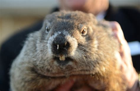 groundhog day on tv live groundhog day 2017 will punxsutawney phil