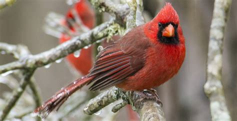 making the winter transition to keep your backyard birds
