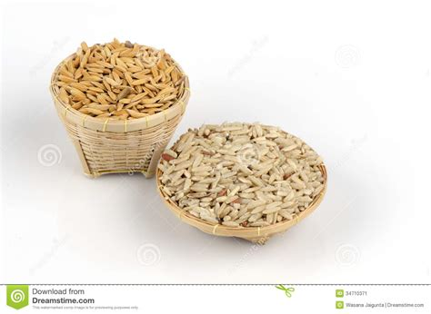 Rice L by Yellow Ripe Rice And Brown Rice Oryza L