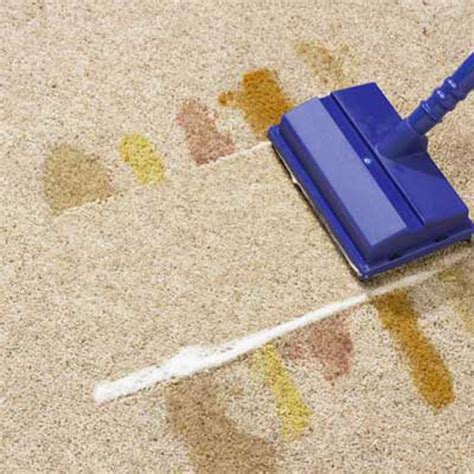 Miracle Foam For Carpet Cleaning New Miracle Foam For Carpet Cleaning Shoo Brush Ebay