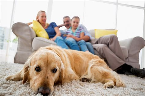 puppy gas gas in dogs symptoms causes diagnosis treatment recovery management cost