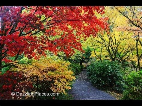 Gardens Bellevue by Fall Color At The Bellevue Botanical Gardens