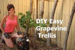 grape trellis plans how to build a diy easy grapevine trellis