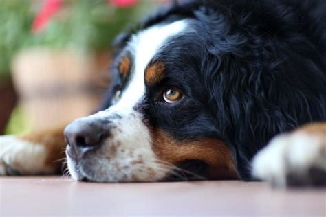 cutest breed in the world the cutest breeds from around the world