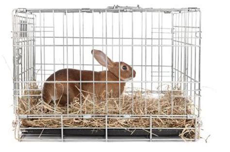best type of rabbit cage | lovetoknow