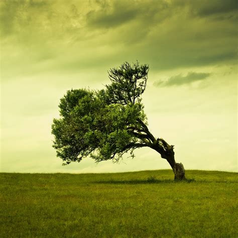 leaning tree ipad wallpaper  iphone wallpapers