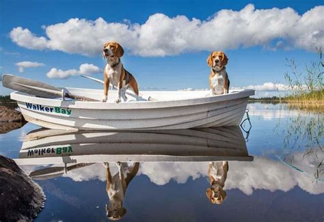 male boat names beagle names unique ideas for your male or female dog