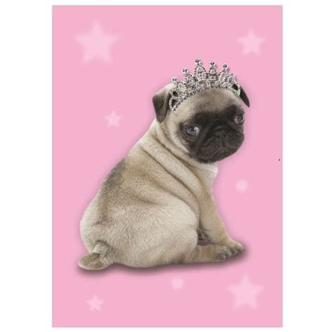 pug wrapping paper princess pug birthday wrapping paper dogs naturally