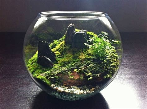 42 best terrain terrariums images on pinterest air