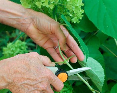 potatura fiori la potatura piante tecnica potatura potare pianta