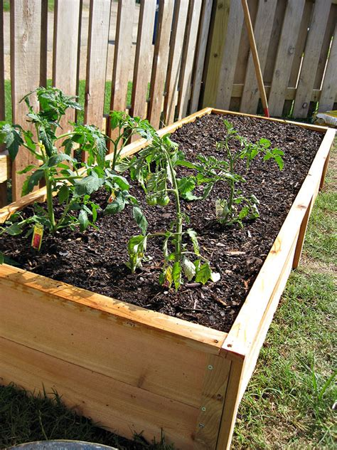 How To Set Up A Vegetable Garden Bed White Ten Dollar Cedar Raised Garden Beds Diy Projects