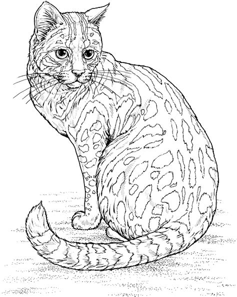 snow cat coloring page free leopard coloring pages