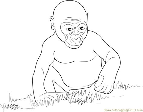 baby gorilla coloring page gorilla baby coloring page free gorilla coloring pages
