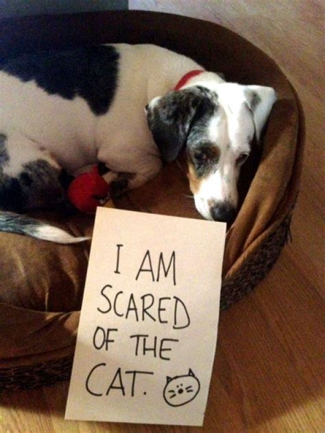 Dog Shaming Meme - dog shaming meme collegehumor post