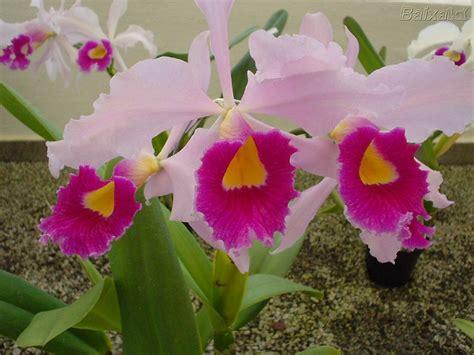 imagenes de raras the gallery for gt orquideas raras