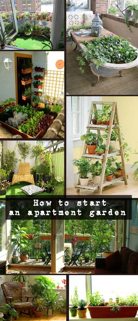 How to start an apartment garden ? tips & tricks by