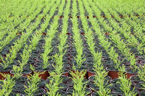 Gardening Degree Horticulture Degree Studylink