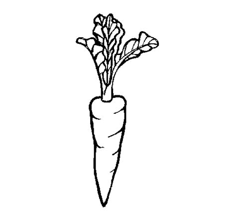 imagenes de verduras para dibujar a lapiz dibujo de zanahoria para colorear dibujos net