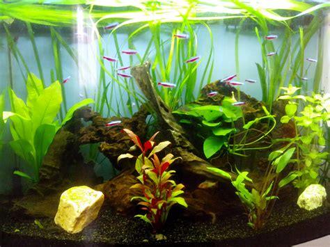 aquarium eau douce 90l