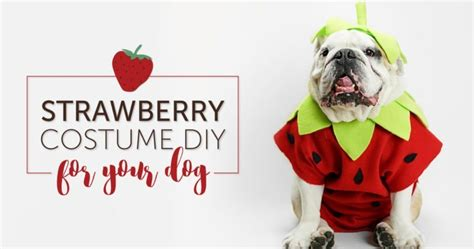 are strawberries ok for dogs diy strawberry costume in 6 easy steps