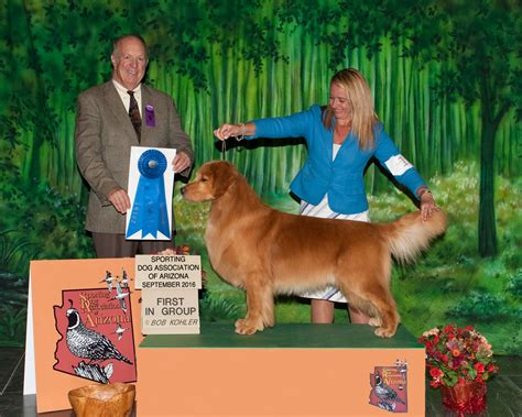 golden retriever puppies prescott az fall 2016 prescott show sporting dogs association of arizona