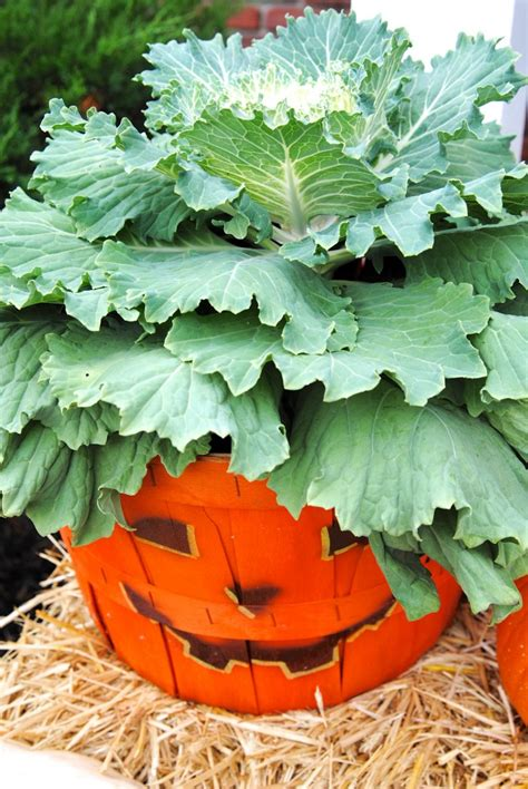 fall pumpkin decorations outside front porch outdoor decor for fall hello chili peppers