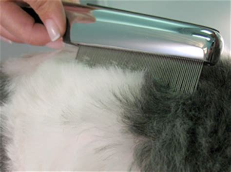 flea comb for dogs 11 methods for pet friendly flea removal