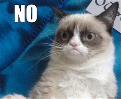 No Cat Meme - grumpy cat meme no