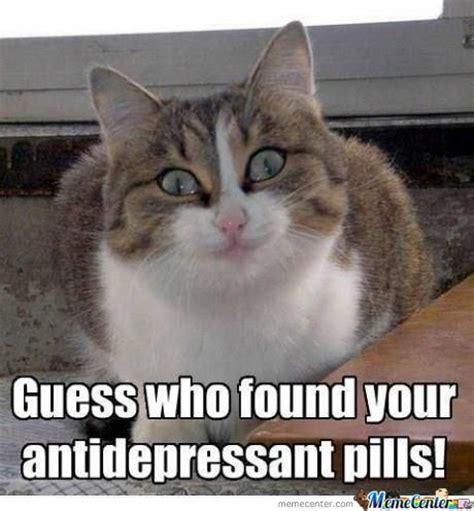 Crazy Cat Memes - happy friday cat memes image memes at relatably com