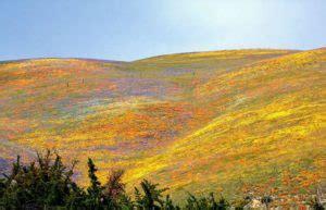 flower fields  gorman hills wondermondo