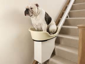 Puppy On Stairs by Stairlift For Overweight Dogs No More Walkies For