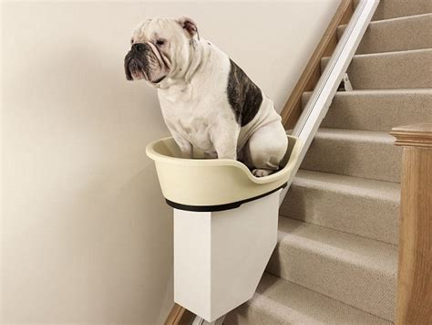 stairs for dogs stairlift for overweight dogs no more walkies for pedigree bums daily mail