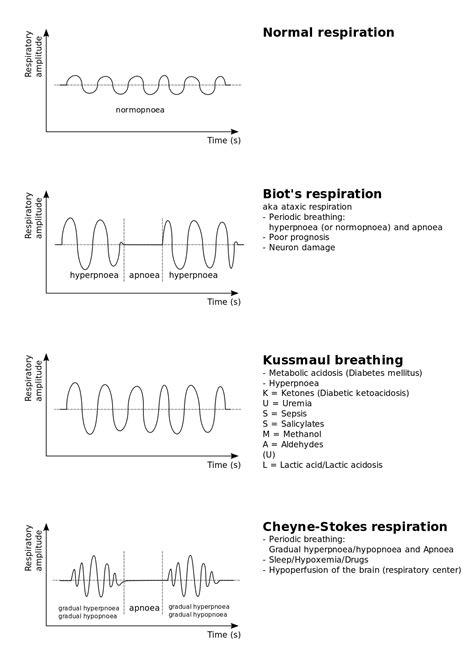 breathing pattern video kussmaul breathing wikipedia