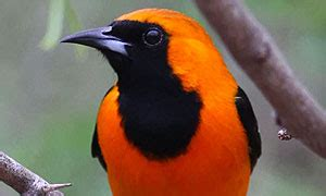 bird id skills: color pattern | all about birds