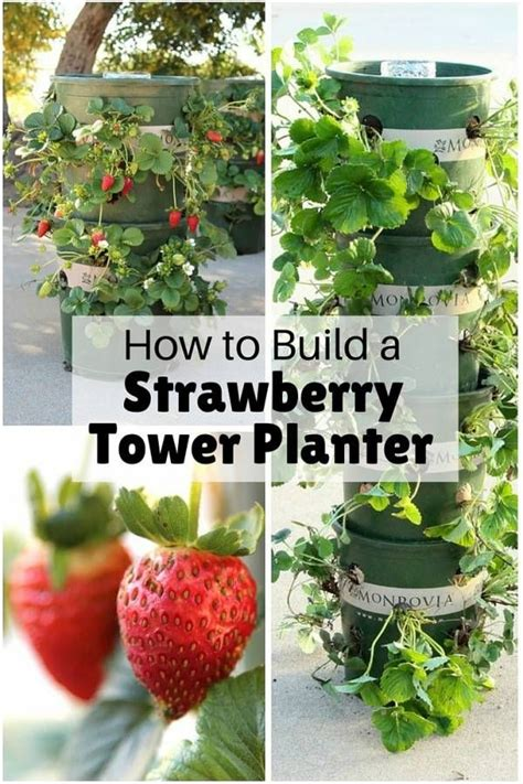 Strawberry Tower Planter by 25 Best Strawberry Tower Ideas On Strawberry