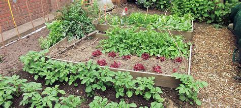Getting Philadelphia Gardens Ready For Fall And Winter Vegetable Garden In Winter
