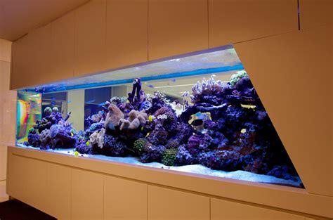 Aquarium Design Centre | aquatic design centre