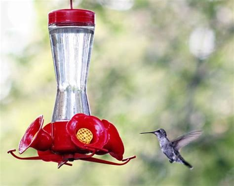 how to make hummingbird nectar nc birds pinterest