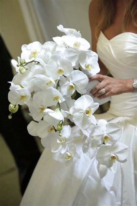 58 best orchids images on white orchids
