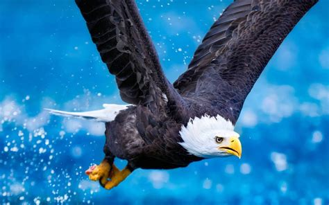 wallpaper 4k eagle eagle full hd wallpaper and background image 1920x1200