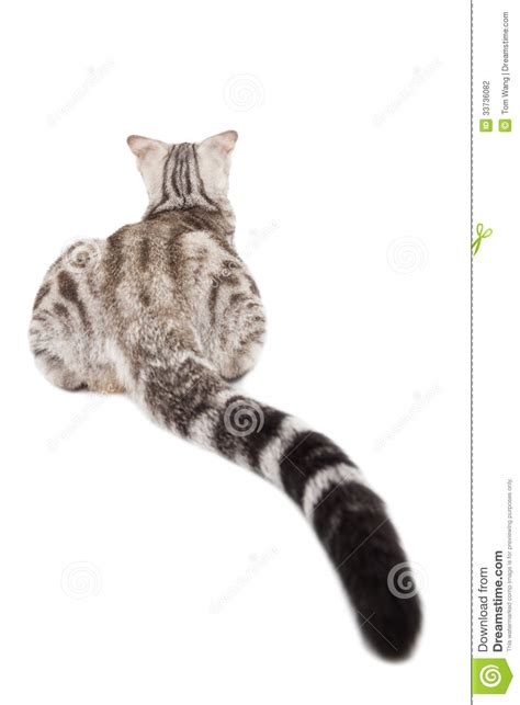 rear view of cat stock photography image 33736082