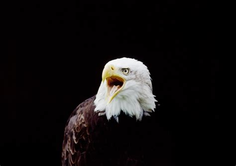 wallpaper 4k eagle 336 eagle hd wallpapers backgrounds wallpaper abyss