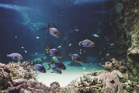 Sydney Aquarium Darling Harbour   Jac & Heath Photography