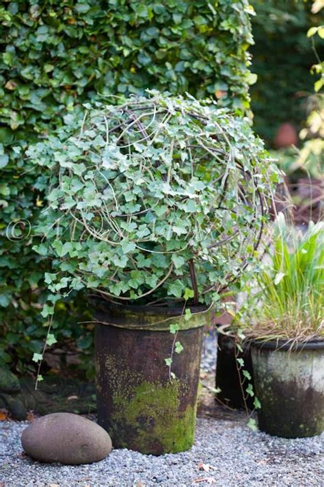 25 best ideas about topiary plants on pinterest