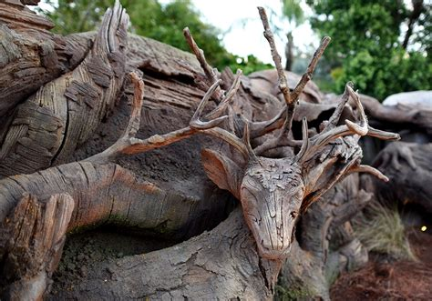 wdwthemeparks the tree of wdwthemeparks news tree of grows new roots at