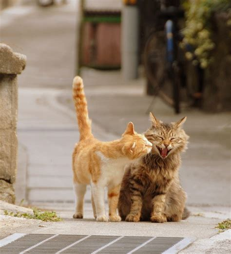 Cats Flickr by Onomichi Days Happy Cats Onomichi Japan Nikon D200 Af