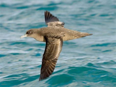 Kaos Natgeo National Geographic Care Planet 1 im 225 genes espectaculares de national geographic animales
