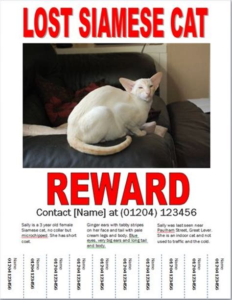 free lost cat flyer template missing person reward template rc flyers